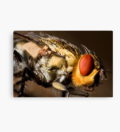 Eye of the fly Canvas Print