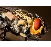 Eye of the fly Photographic Print