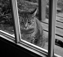 Can I Come In? by Colleen Friedman