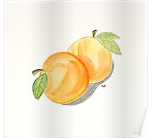 Orange Apricots Watercolor Painting. Poster