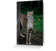 Cheetah  Pride  Greeting Card