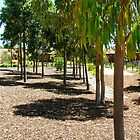 Eucalyptus grove, Cranbourne by Maggie Hegarty