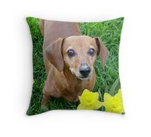Rusty In The Daffodils Throw Pillow