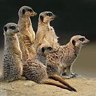 Marvellous Meerkats by Krys Bailey