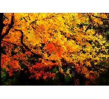 Curtain of Colour Photographic Print