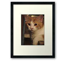 Mister Cool Framed Print