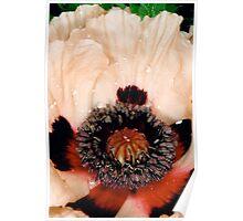 Poppy1 Poster