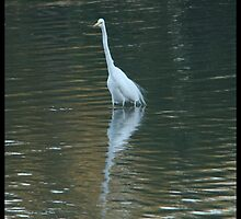 The Egret by ariete