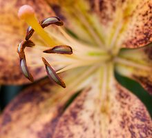 Speckled Lily by Andy Mulley