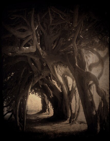 ancient yew by Cate Davies