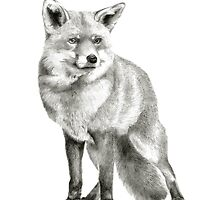 The Fox by art-koncept
