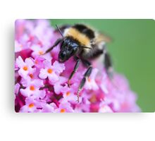 Bee's face! Canvas Print