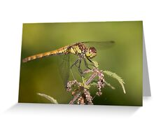 Common darter. Greeting Card