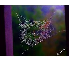Fall Web Photographic Print