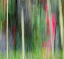 just the colours by Jean Poulton