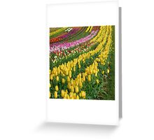 Swathes of Colour Greeting Card