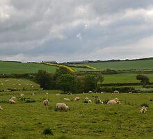Rural England............... by lynn carter