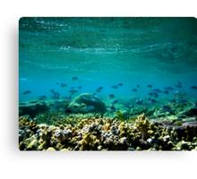 Knuckle Reef Canvas Print