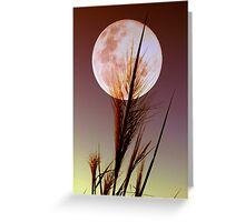 Moon Reeds Greeting Card
