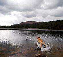 Fetch by Marc McDonald