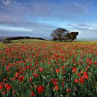 A hero's field by outwest photography.co.uk