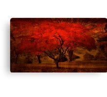 Bright Maple Tree Canvas Print