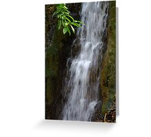 Morning Splash Greeting Card