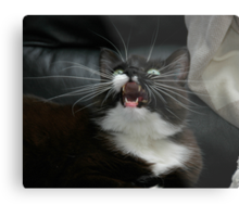 Whiskers from frame to frame Metal Print