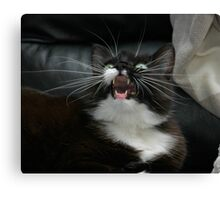 Whiskers from frame to frame Canvas Print