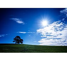 Lone Tree in the Sun Photographic Print