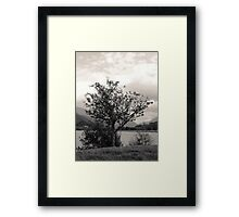 Mountain Ash Framed Print