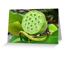 funny aquatic plant Greeting Card