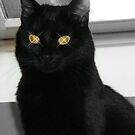 Black Cat 1 by JillyPixie