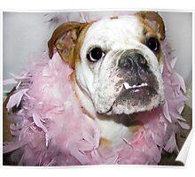 Pink boa Poster