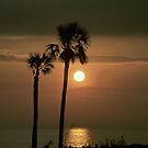 Sunset Palms by WTBird