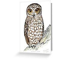 Boobook Owl Greeting Card