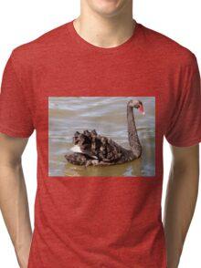 Fabulous Feathers, Black Swan, Lake Ginninderra, A.C.T. Australia. Tri-blend T-Shirt