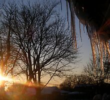 Winter Sunshine by Hallie Duesenberg