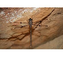 Fly Dragon Fly Photographic Print