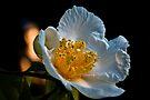Japanese Flower by LudaNayvelt