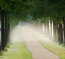 Walking on another misty lane by jchanders