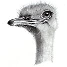 Ostrich Head In Pencil by Joyce