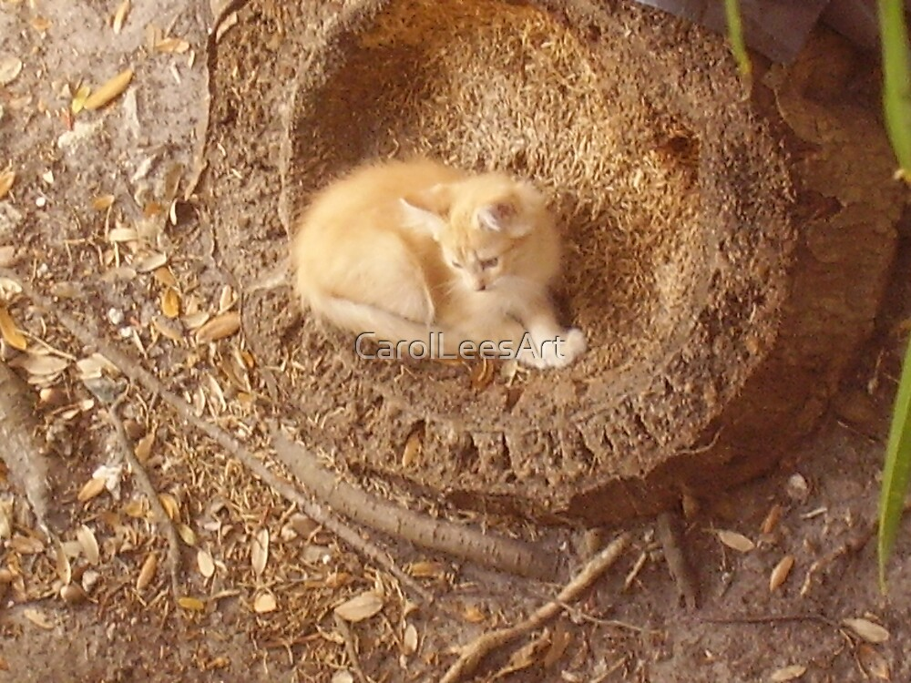 Kitten in the Palm Tree stump by CarolLeesArt