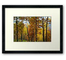 Ozark Forest Framed Print