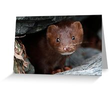 Sandy Whiskers, Soulful Eyes Greeting Card