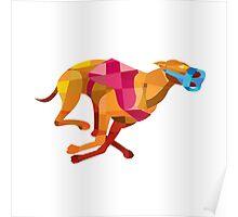Greyhound Dog Racing Low Polygon Poster