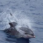 Dolphins Tenerife Spain  by DutchLumix