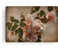 rose bower Canvas Print