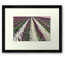 Rows Framed Print