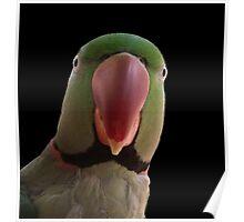 Mr Slater's Parrot Poster